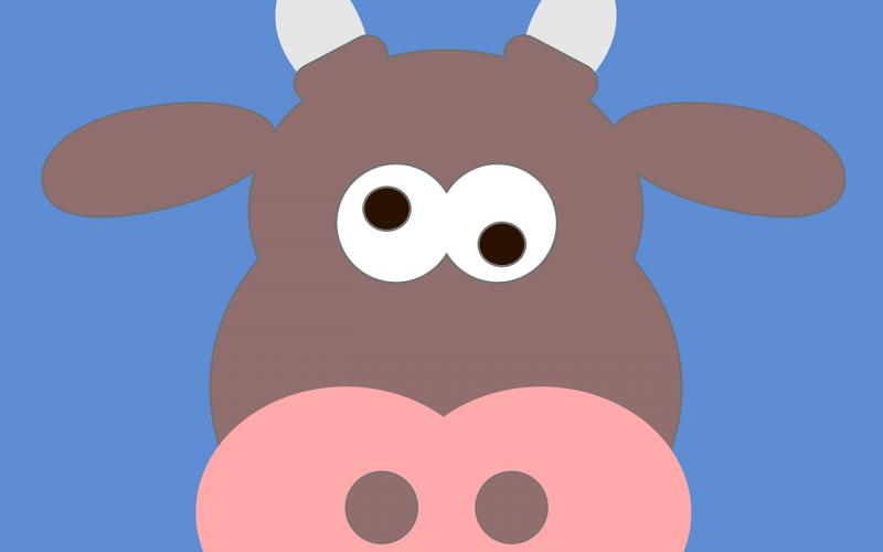 Gek kijkende koe